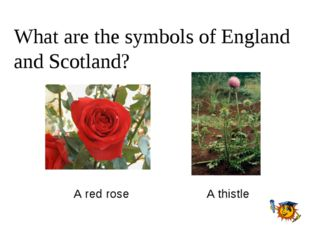 What are the symbols of England and Scotland? A red rose A thistle