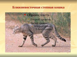 Ближневосточная степная кошка