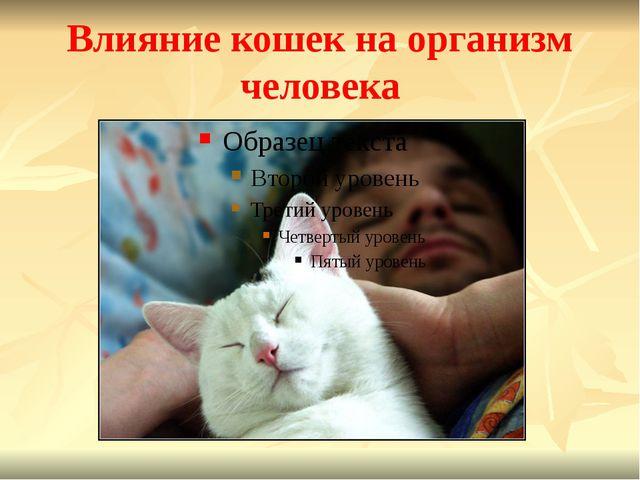 Влияние кошек на организм человека