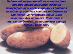 Надежный защитник яблок и картофеля против листогрызущих личинок чешуякрылых