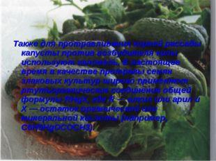 Также для протравливания корней рассады капусты против возбудителя килы испол