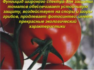 Фунгицид широкого спектра для защиты томатов обеспечивает устойчивую защиту,
