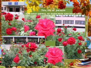 Там, где не растут красивые цветы, не вырастут красивые идеи