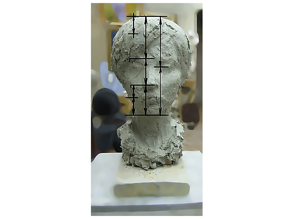 """Согласно классическим пропорциям, """"слезник"""" (внутренний угол глаза) делит выс..."""