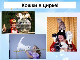 Кошки в цирке!