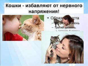 Кошки - избавляют от нервного напряжения!