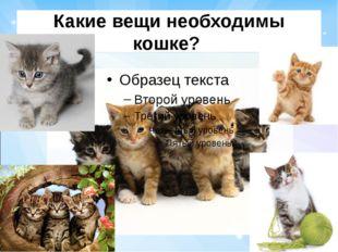 Какие вещи необходимы кошке?