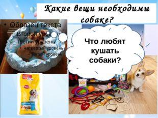 Какие вещи необходимы собаке? Что любят кушать собаки?