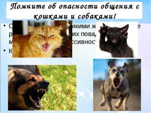 Помните об опасности общения с кошками и собаками! Они когда-то были дикими ж