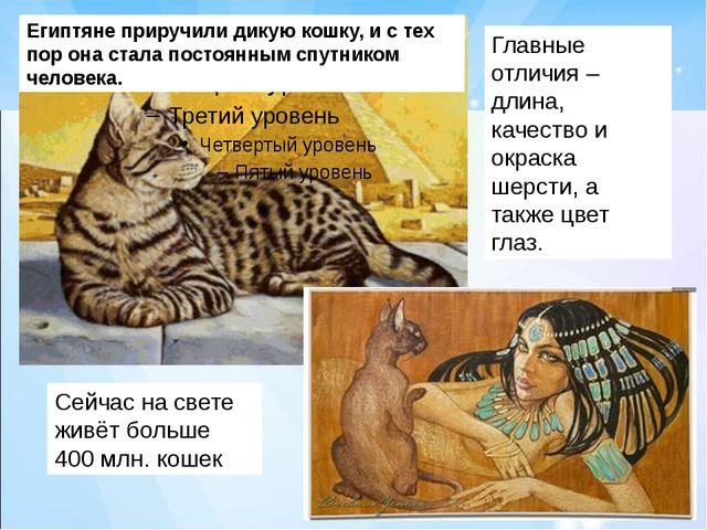 Сейчас на свете живёт больше 400 млн. кошек Главные отличия – длина, качество...