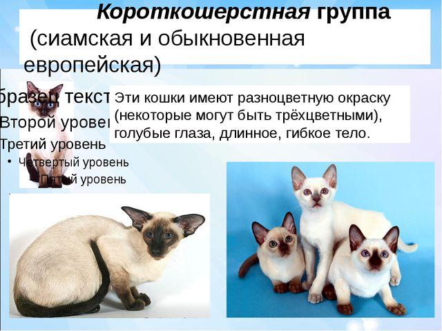 Короткошерстная группа (сиамская и обыкновенная европейская) Эти кошки имеют...