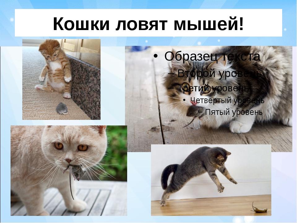 Кошки ловят мышей!