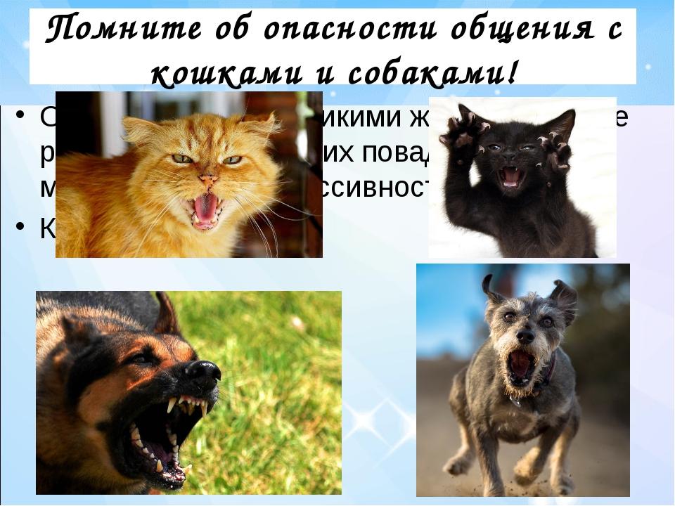 Помните об опасности общения с кошками и собаками! Они когда-то были дикими ж...