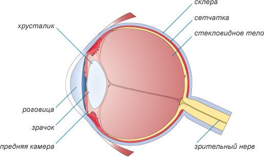 Описание: Строение глаза