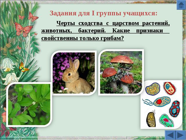 Черты сходства с царством растений, животных, бактерий. Какие признаки свойс...