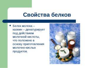 Свойства белков Белок молока – казеин – денатурирует под действием молочной к