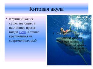 Китовая акула Крупнейшая из существующих в настоящее время видовакул, а такж