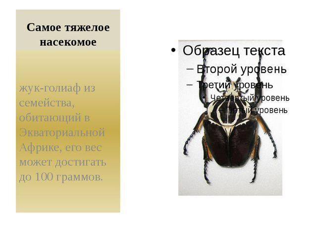 Самое тяжелое насекомое жук-голиаф из семейства, обитающий в Экваториальной А...