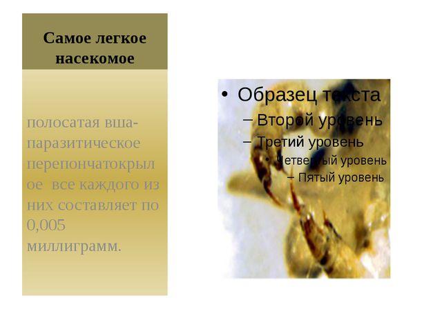 Самое легкое насекомое полосатая вша- паразитическое перепончатокрылое все ка...