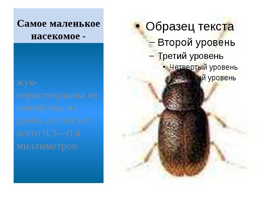 Самое маленькое насекомое- жук-перистокрылка из семейства, их длина достигае...