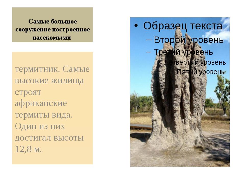 Самые большое сооружение построенное насекомыми термитник. Самые высокие жил...