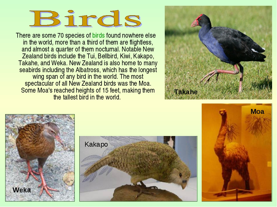 There are some 70 species of birds found nowhere else in the world, more tha...