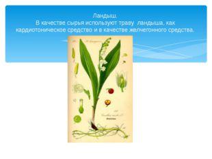 Ландыш. В качестве сырья используют траву ландыша, как кардиотоническое средс