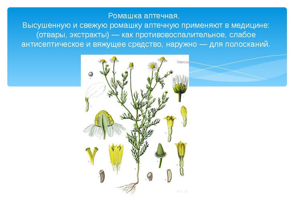 Ромашка аптечная. Высушенную и свежую ромашку аптечную применяют в медицине:...