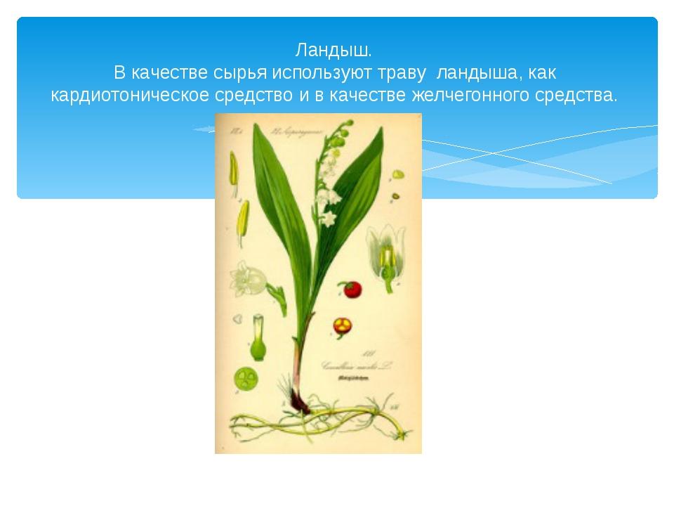 Ландыш. В качестве сырья используют траву ландыша, как кардиотоническое средс...