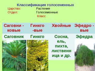 Классификация голосеменных Царство: Растения Отдел: Голосеменные Класс Са