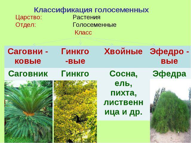 Классификация голосеменных Царство: Растения Отдел: Голосеменные Класс Са...