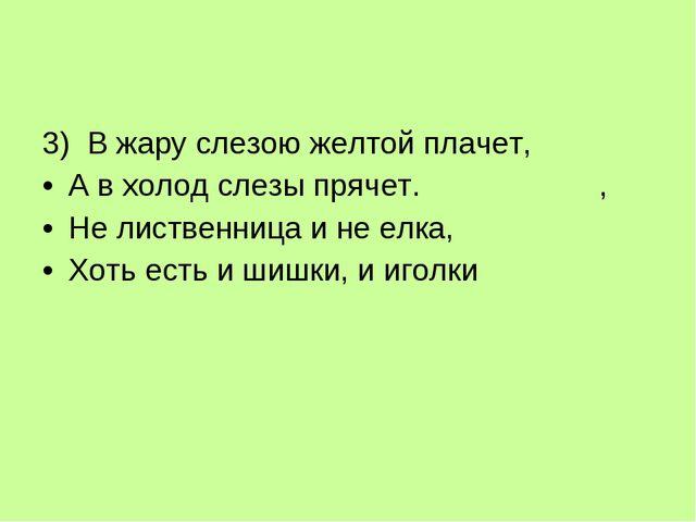 3) В жару слезою желтой плачет, А в холод слезы прячет. , Не лиственница...