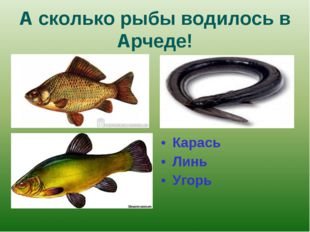 А сколько рыбы водилось в Арчеде! Карась Линь Угорь