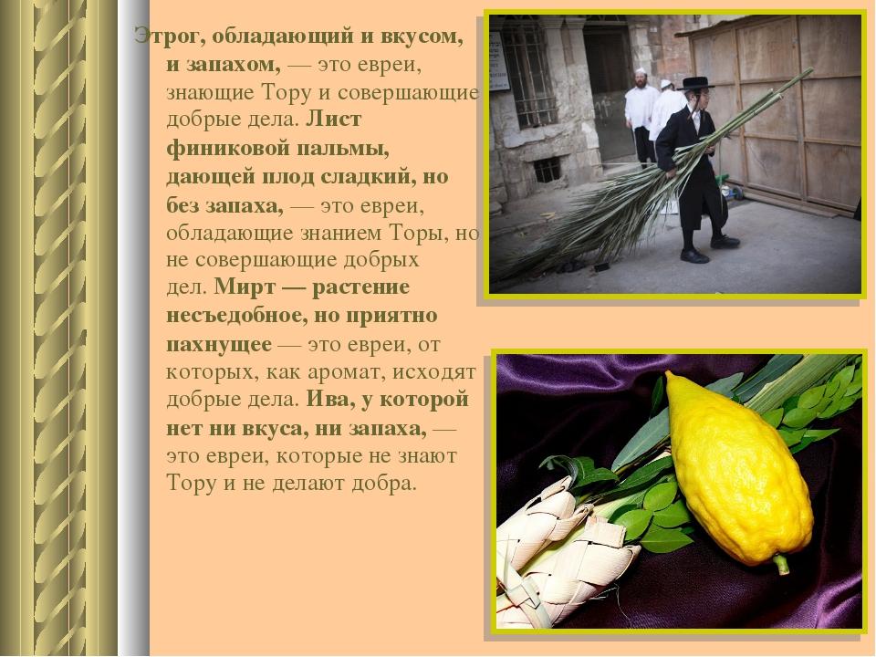 Этрог, обладающий и вкусом, и запахом,— это евреи, знающие Тору и совершающи...
