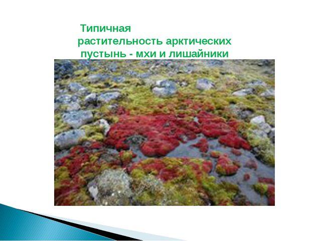 Типичная растительностьарктическихпустынь- мхи и лишайники