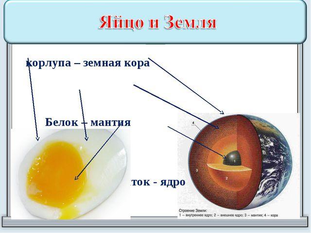 Скорлупа – земная кора  Белок – мантия  Желток - ядро