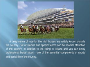 A deep sense of love for the Irish horses are widely known outside the countr