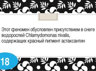 Этот феномен обусловлен присутствием в снеге водорослей Chlamydomonas nivalis
