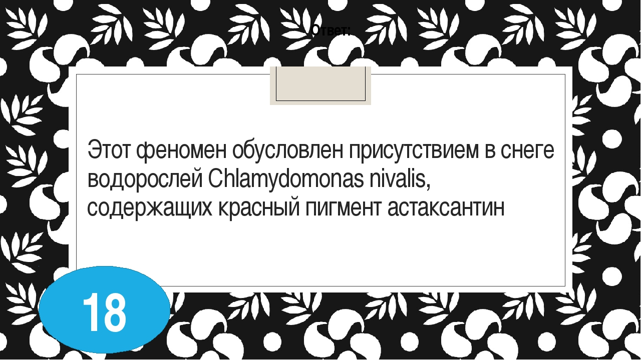 Этот феномен обусловлен присутствием в снеге водорослей Chlamydomonas nivalis...