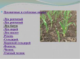 Луковичные и стеблевые овощи: -Лук репчатый -Лук репчатый -Лук-батун -Лук-по
