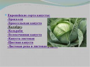 Европейские сорта капусты: -Брокколи -Брюссельская капуста -Калабрез -Кольра