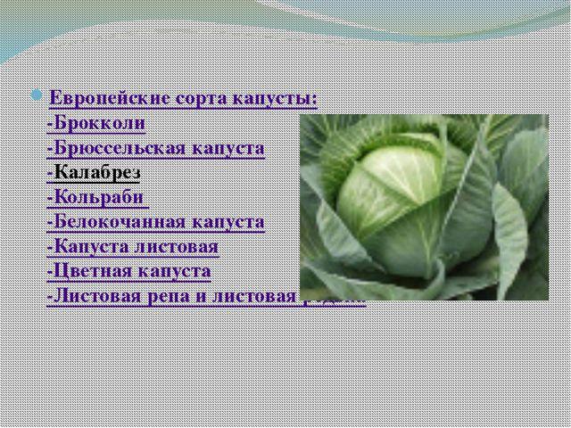 Европейские сорта капусты: -Брокколи -Брюссельская капуста -Калабрез -Кольра...