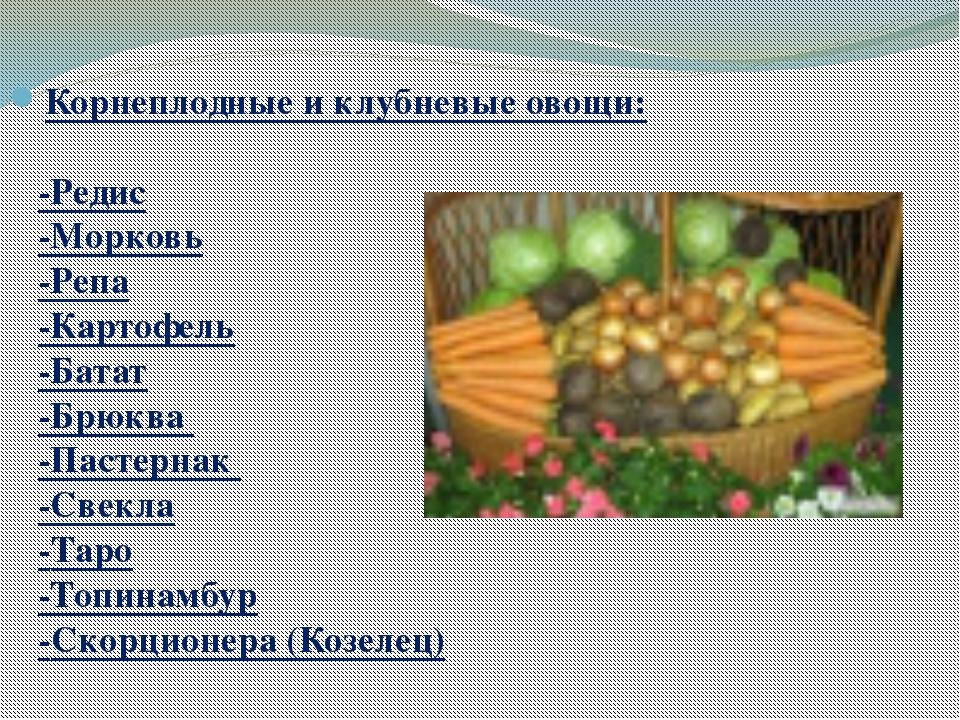 Корнеплодные и клубневые овощи: -Редис -Морковь -Репа -Картофель -Батат -Брюк...