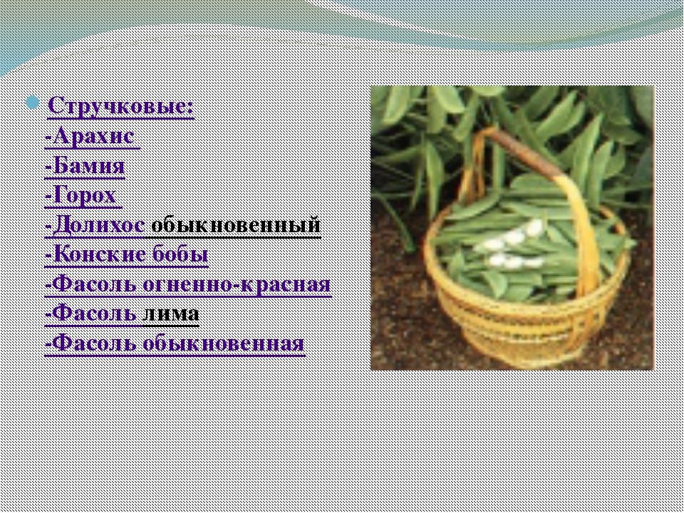 Стручковые: -Арахис -Бамия -Горох -Долихос обыкновенный -Конские бобы -Фасол...