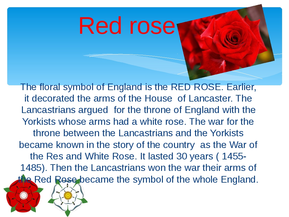 The floral symbol of England is the RED ROSE. Earlier, it decorated the arms...