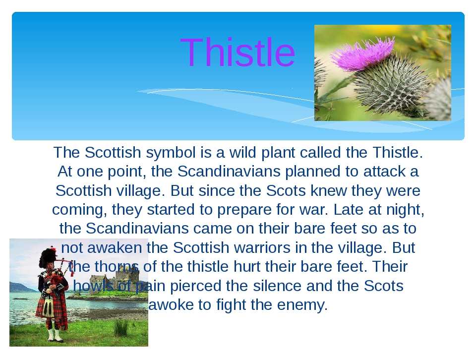 The Scottish symbol is a wild plant called the Thistle. At one point, the Sca...