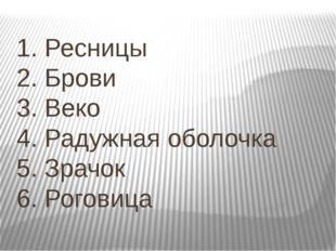 1. Ресницы 2. Брови 3. Веко 4. Радужная оболочка 5. Зрачок 6. Роговица