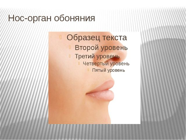 Нос-орган обоняния
