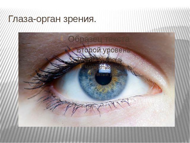 Глаза-орган зрения.