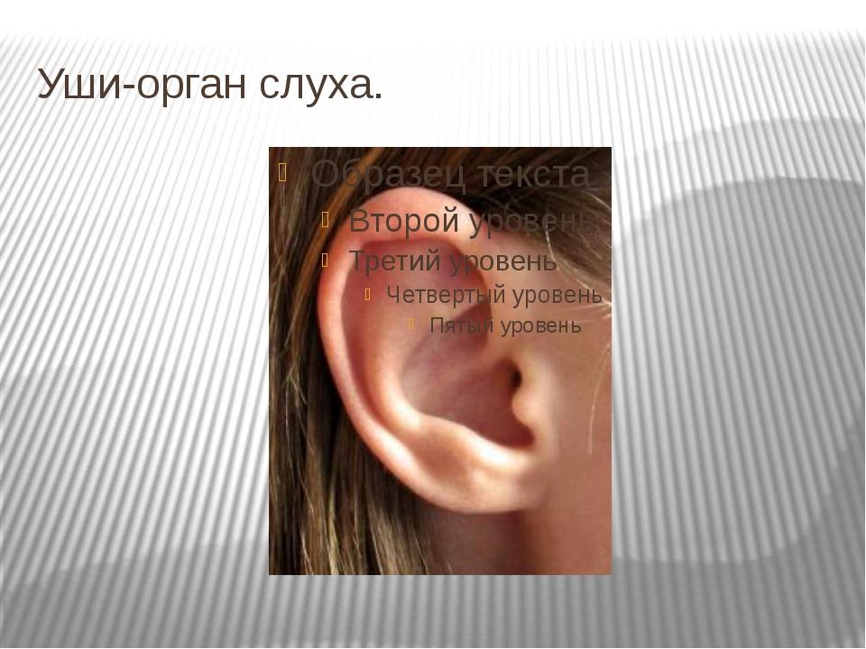 Уши-орган слуха.